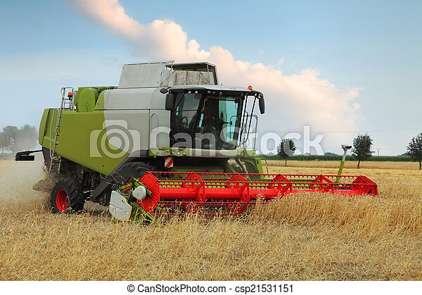Wheat field with harvester - csp21531151