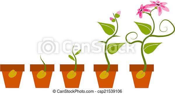 Vector Clip Art de fases, Crecimiento, planta - fases, Crecimiento ...