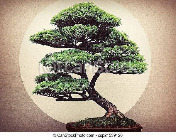 Bonsai In The Limelight