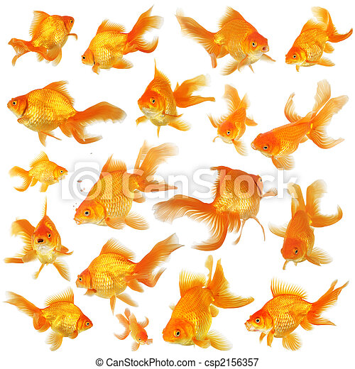 Image de collage poisson rouge fantail collage de for Tarif poisson rouge