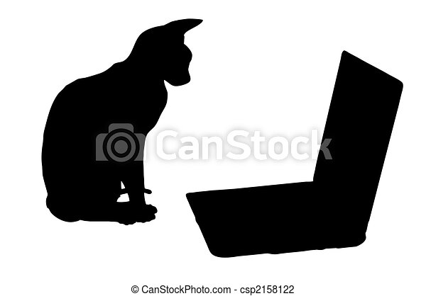 Black And White Cats Cat Sits Near Laptop Black