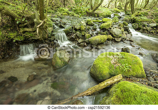 Brook and mossy stone - csp21592136