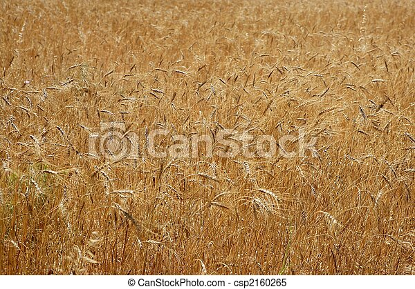 Field Crops Clipart Cereal Crop Field Texture