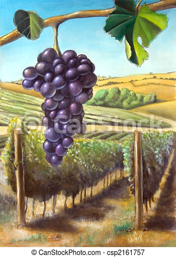 Grape and vineyard - csp2161757