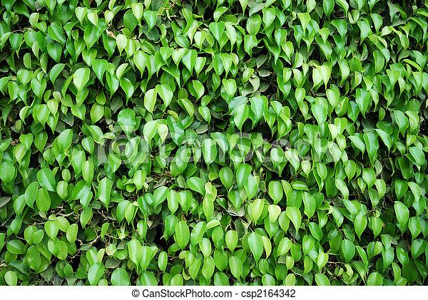 Photo de caoutchouc plante arbres vert barri re for Plante caoutchouc