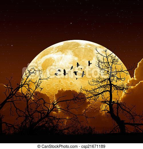 Full moon - csp21671189