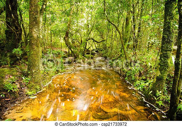 tropical rain forest in Thailand - csp21733972