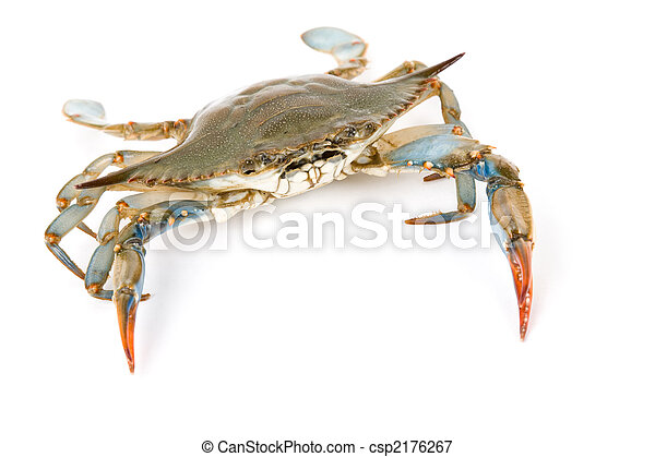 Blue Crab - csp2176267