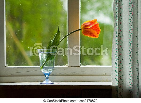 Tulip on window sill - csp2178870