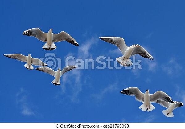 Dessins de mouettes voler contre les bleu ciel fin - Dessins de mouettes ...