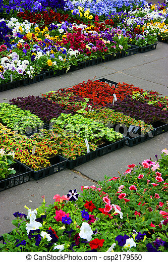 Multicolored pansies and coleus plants - csp2179550