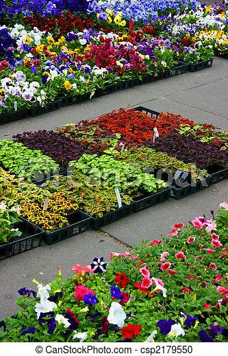 Multicolored pansies and coleus plants - csp2179550