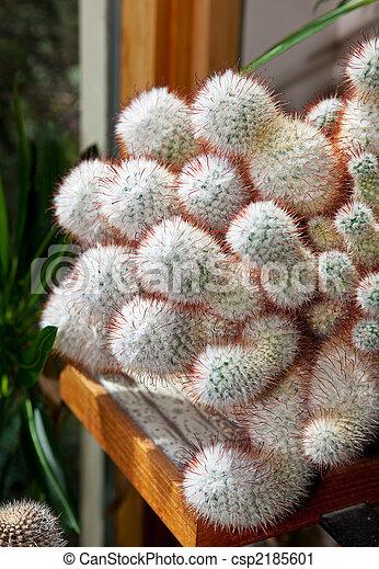 Fuzzy Cactus - csp2185601