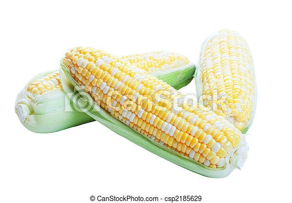 Raw Corn in Husks - csp2185629