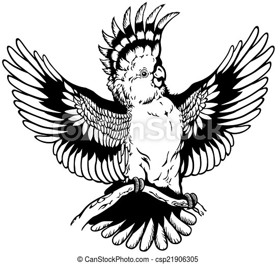 Cockatoo Line Drawing Vector Cockatoo Black White