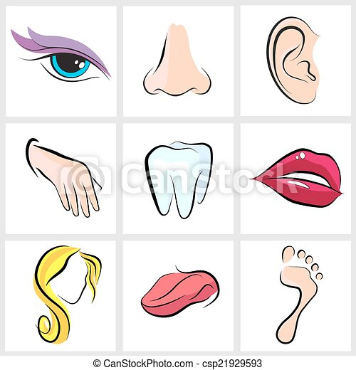 body parts - set icons with flat... csp21929593 - Search Clip Art ...