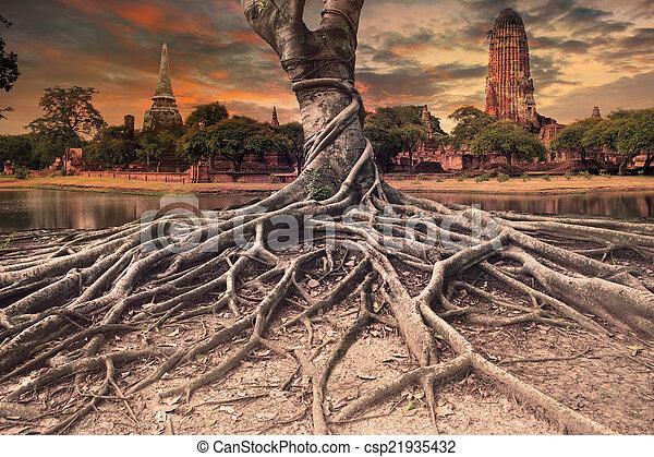 Photos de terre vieux grand arbre pagode banian - Arbre a faible racine ...