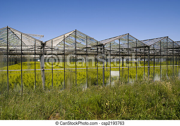 Greenhouse with crops - csp2193763