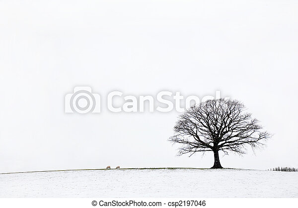 Oak Tree in Winter   - csp2197046