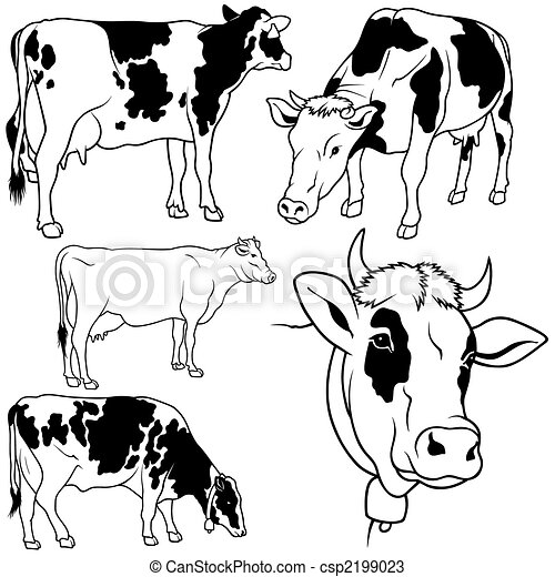 Vectors of Cow Set 02 - black hand drawn illustration csp2199023 ...