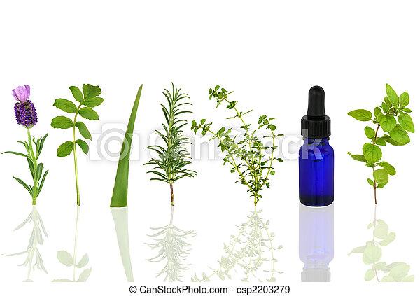 Medicinal and Culinary Herbs - csp2203279