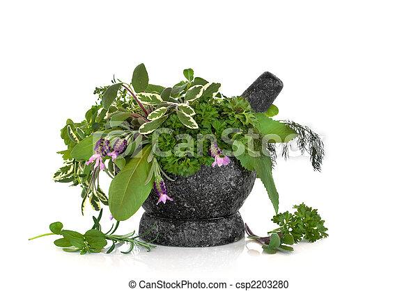 Healing and Culinary Herbs - csp2203280