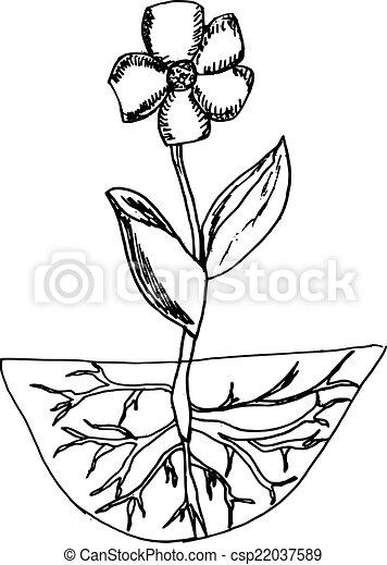 Vecteur de fleur, racines - main, fait, Illustration ...