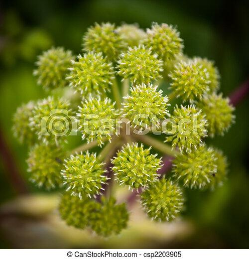 Photo ang lique plante image images photo libre de for Plante angelique