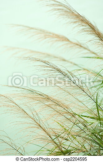 Bulrush - csp2204595