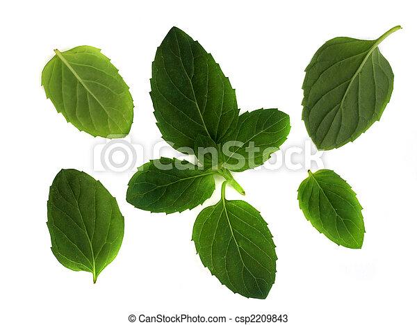 Mint leaves - csp2209843
