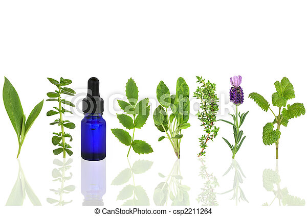 Medicinal and Culinary Herbs - csp2211264