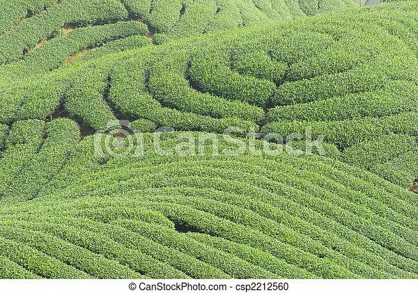 Te træer stock motiv motiver royaltyfrit foto stock fotos