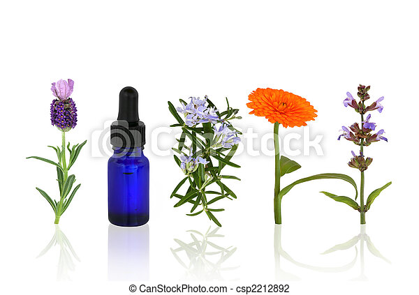 Aromatherapy Herbs and Flowers - csp2212892
