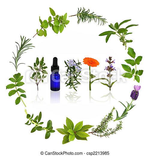 Medicinal and Culinary Herbs - csp2213985