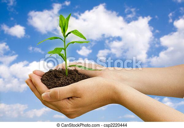 Pflanze, landwirtschaft,  Hand - csp2220444