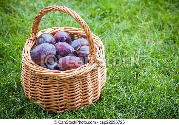 organic ripe plums in a basket