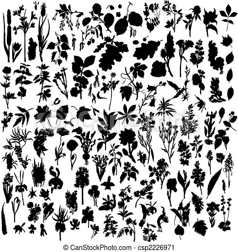 berries and flowers silhouettes - csp2226971