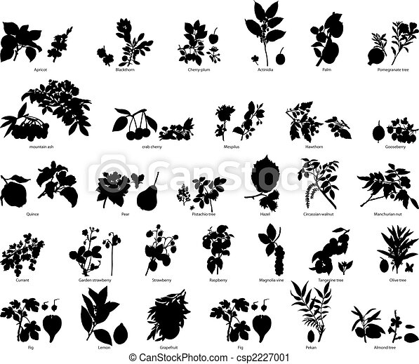 berries and flowers silhouettes - csp2227001