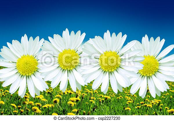 Spring - csp2227230