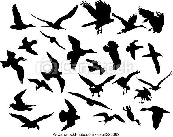 Vector flying birds - csp2228369