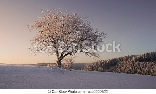 stock foto von kalte winter winter schwarz wald. Black Bedroom Furniture Sets. Home Design Ideas