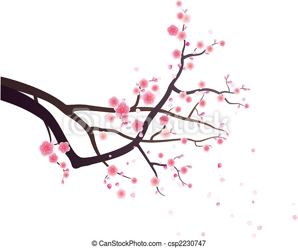 plum blossom - csp2230747