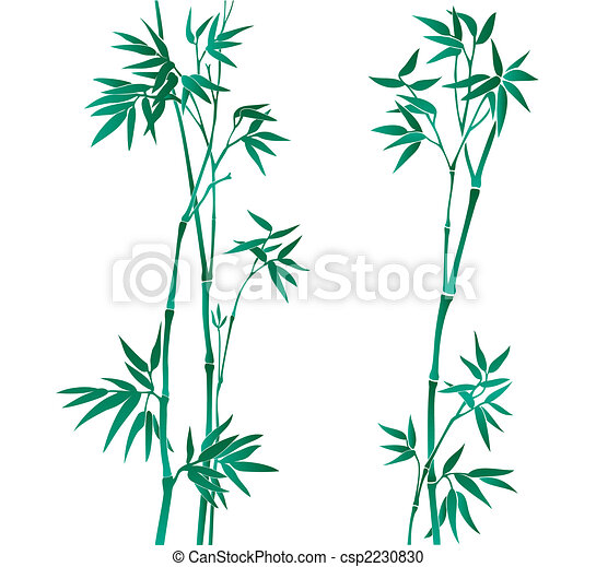 Bamboo illustration - csp2230830