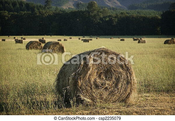 Title  Caption agricultural field with rolled stacks of hay Keywords field, hay, agriculture, summer, nature, wheat, sky, landscape, meadow, rural, countryside, farm, grass, golden, blue, natural, farmland, country, season, outdoor, plant, gold, straw, sun, grow, cut, feed, view, grain, spring, stack, scene, farming, prairie, background, autumn, industry, scenery - csp2235079