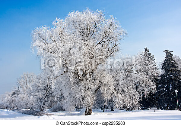 winter frost tree - csp2235283