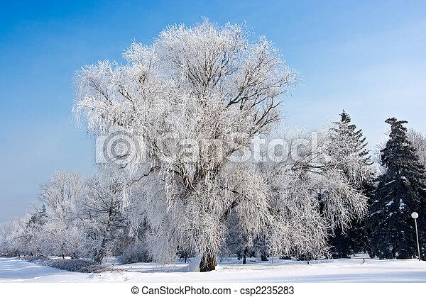 winter frost tree - csp2235283