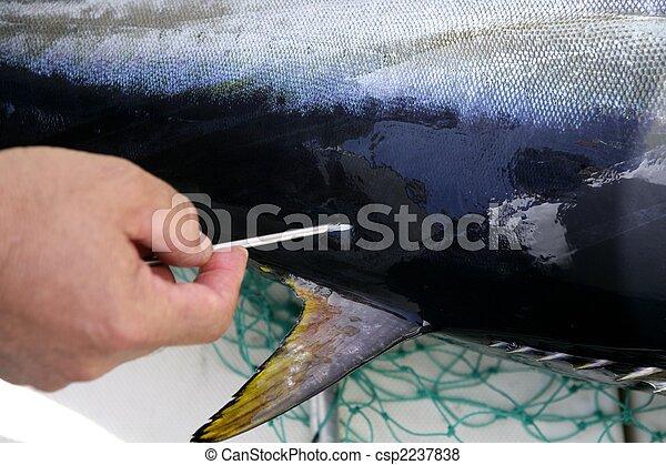 befrielse, fish, middelhavet, tunfisk, mærke - csp2237838