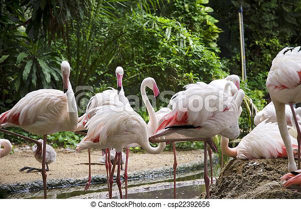 Flamingó, madarak - csp22392656