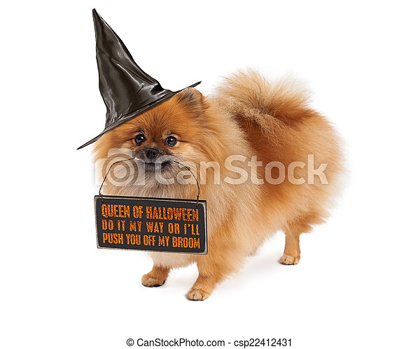 Stock Photos of Pomeranian Halloween Witch Dog - A cute Pomeranian ...