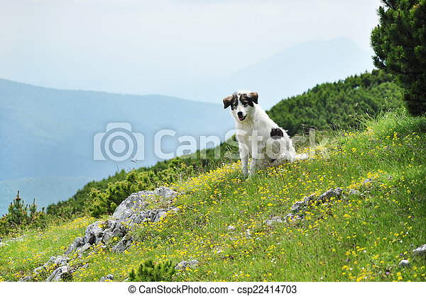 White dog in the mountains.